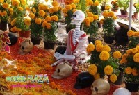Tổ chức lễ hội halloween